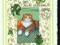 orange and white cat on lime colors