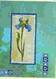 Turquoise iris