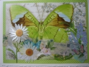 green butterfly with daisies